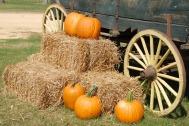 pumpkins-1572854_1920