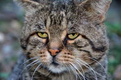 cat-2749889_1920