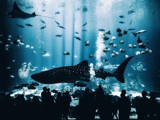 fish-2559570_1920
